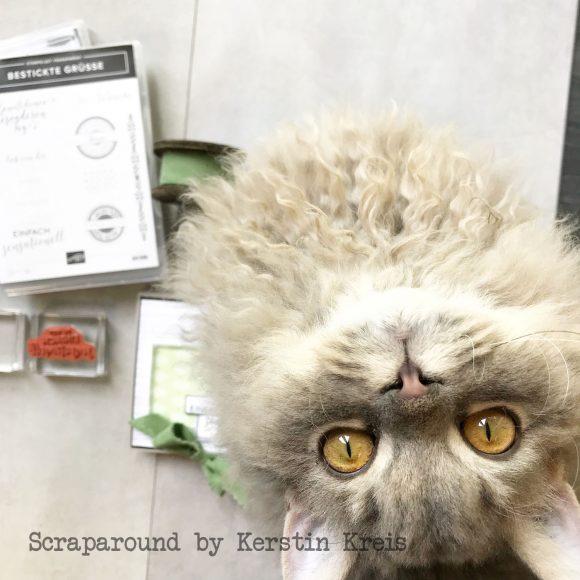 stampinup minialbum Klappkarte Palmengarten Tropenflair Stempel GDP143 Detailbild9